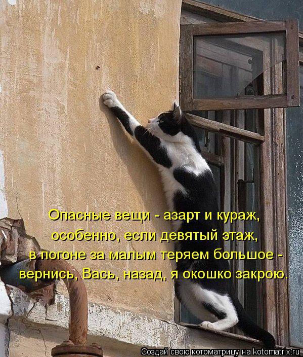 Котоматрица: Опасные вещи - азарт и кураж,  особенно, если девятый этаж, в погоне за малым теряем большое -  вернись, Вась, назад, я окошко закрою.