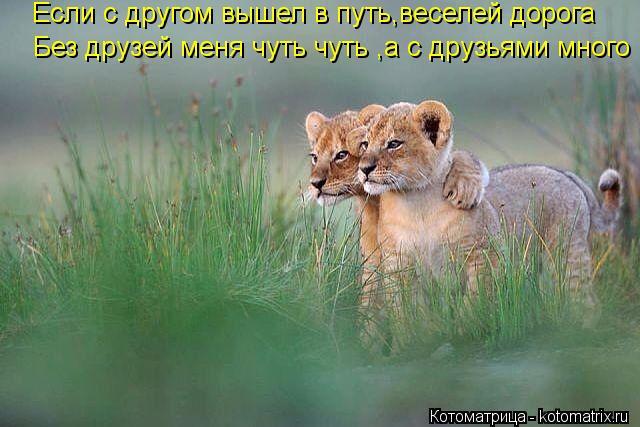 Котоматрица: Если с другом вышел в путь,веселей дорога Без друзей меня чуть чуть ,а с друзьями много