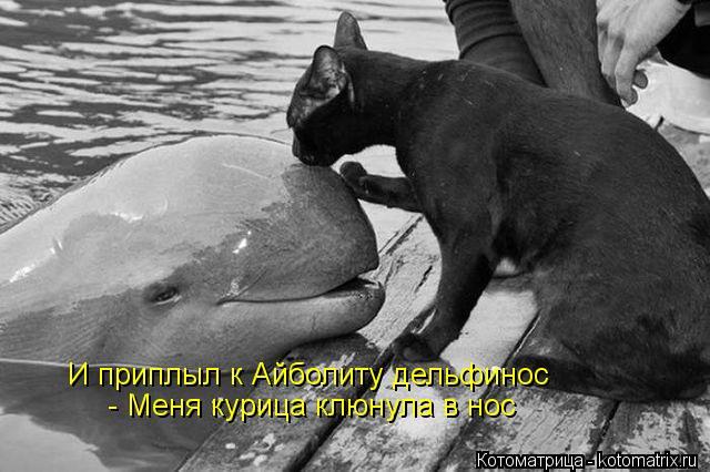Котоматрица: И приплыл к Айболиту дельфинос - Меня курица клюнула в нос