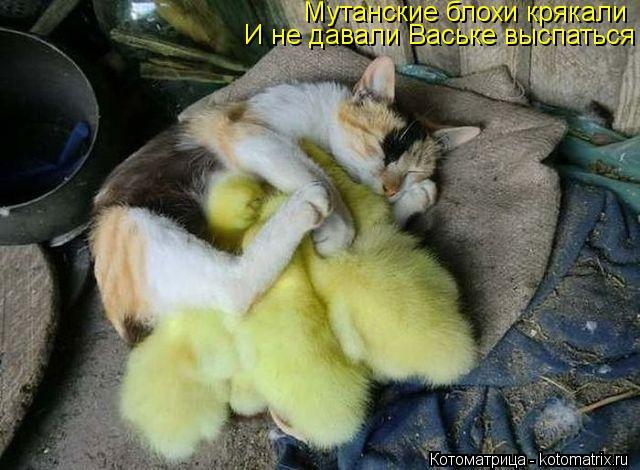 Котоматрица: Мутанские блохи крякали И не давали Ваське выспаться
