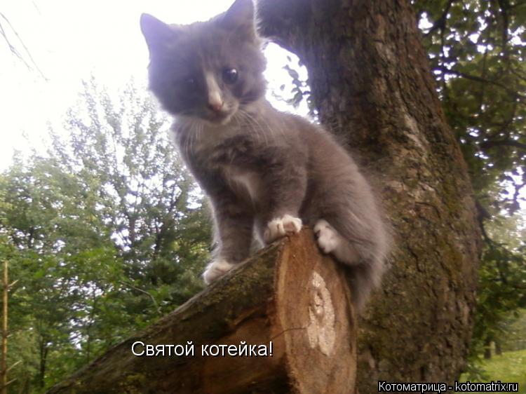 Котоматрица: Святой котейка!