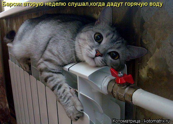 Котоматрица: Барсик вторую неделю слушал,когда дадут горячую воду