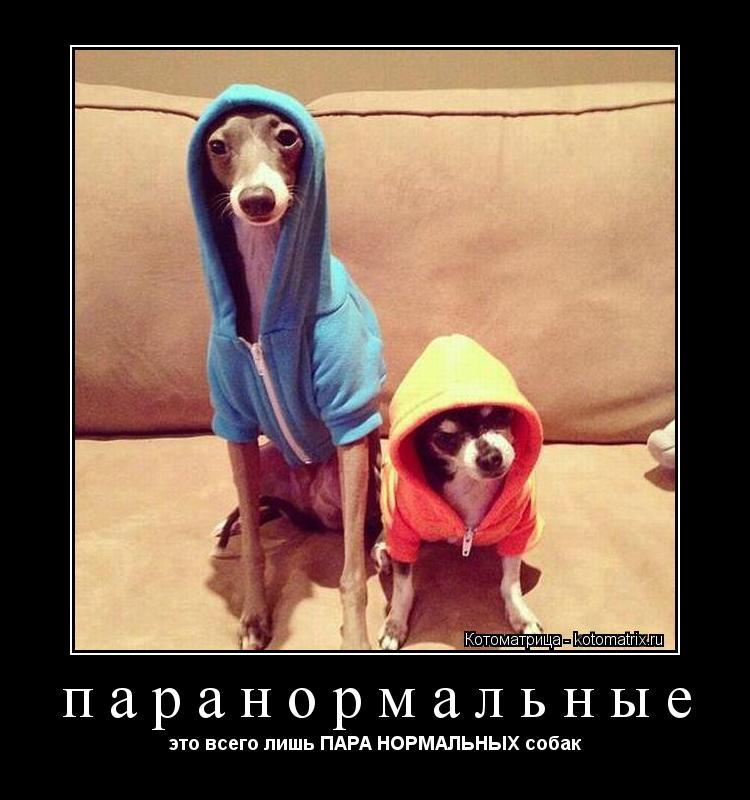 Котоматрица: паранормальные это всего лишь ПАРА НОРМАЛЬНЫХ собак