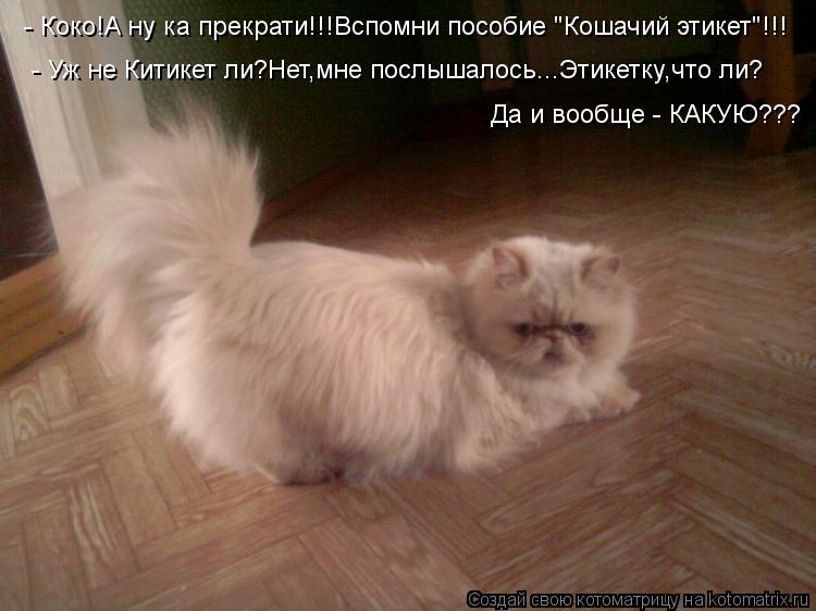 """Котоматрица: - Коко!А ну ка прекрати!!!Вспомни пособие """"Кошачий этикет""""!!! - Уж не Китикет ли?Нет,мне послышалось...Этикетку,что ли? Да и вообще - КАКУЮ???"""