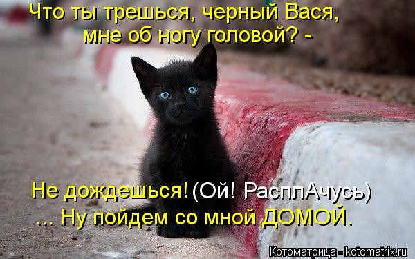 Котоматрица: Что ты трешься, черный Вася, мне об ногу головой? -  Не дождешься! (Ой! РасплАчусь) ... Ну пойдем со мной ДОМОЙ.