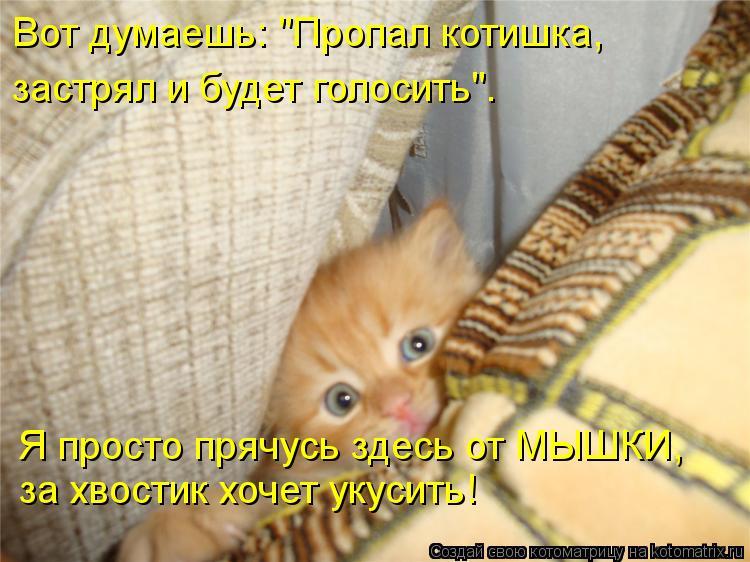 """Котоматрица: Я просто прячусь здесь от МЫШКИ, за хвостик хочет укусить! Вот думаешь: """"Пропал котишка, застрял и будет голосить""""."""