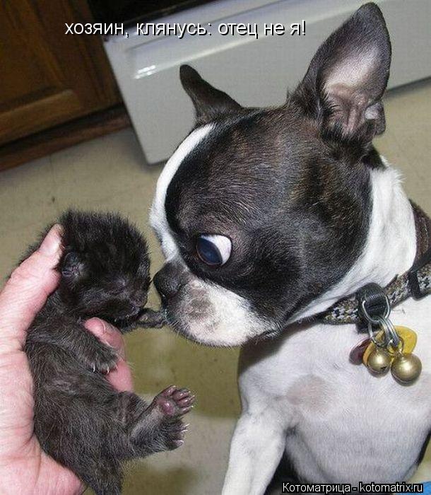 Котоматрица: хозяин, клянусь: отец не я!