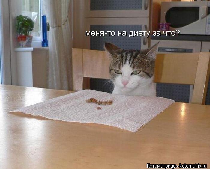 Котоматрица: меня-то на диету за что?