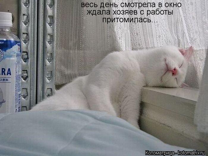 Котоматрица: весь день смотрела в окно ждала хозяев с работы притомилась...