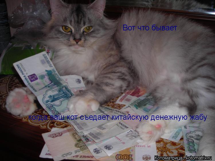 Котоматрица: Вот что бывает  когда ваш кот съедает китайскую денежную жабу