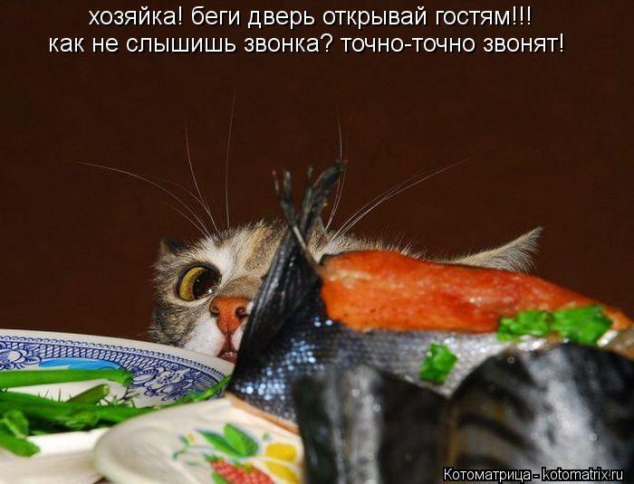 Котоматрица: хозяйка! беги дверь открывай гостям!!! как не слышишь звонка? точно-точно звонят!