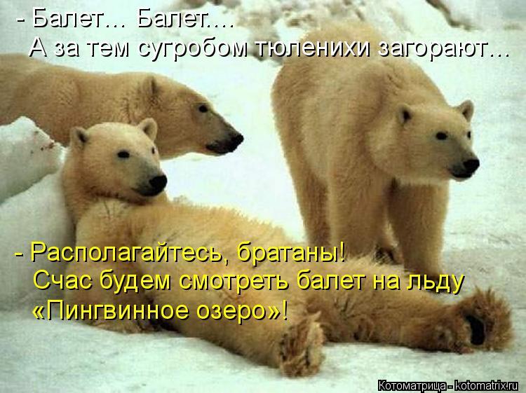 Котоматрица: - Располагайтесь, братаны!  Счас будем смотреть балет на льду  «Пингвинное озеро»!  - Балет… Балет.… А за тем сугробом тюленихи загорают…