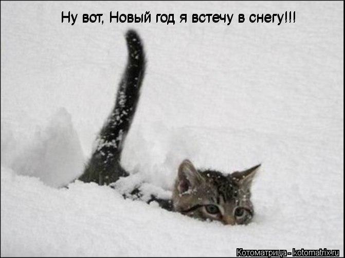 Котоматрица: Ну вот, Новый год я встечу в снегу!!! Ну вот, Новый год я встечу в снегу!!!