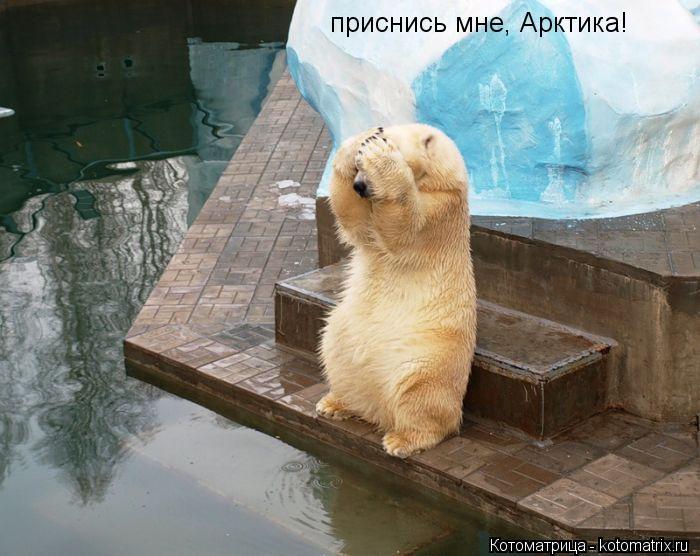 Котоматрица: приснись мне, Арктика!