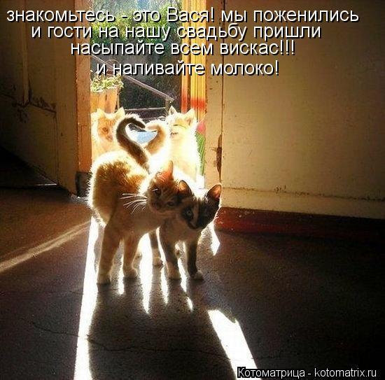 Котоматрица: знакомьтесь - это Вася! мы поженились и гости на нашу свадьбу пришли насыпайте всем вискас!!!  и наливайте молоко!