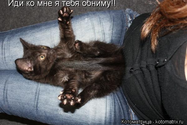 Котоматрица: Иди ко мне я тебя обниму!!
