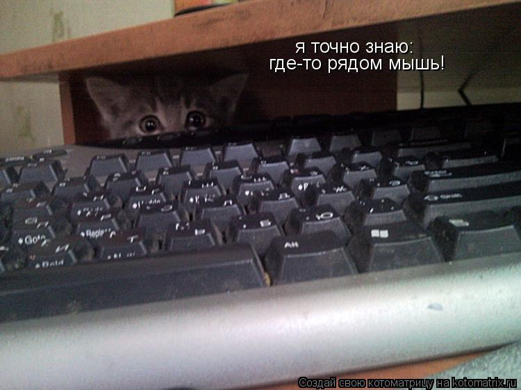 Котоматрица: я точно знаю: где-то рядом мышь!
