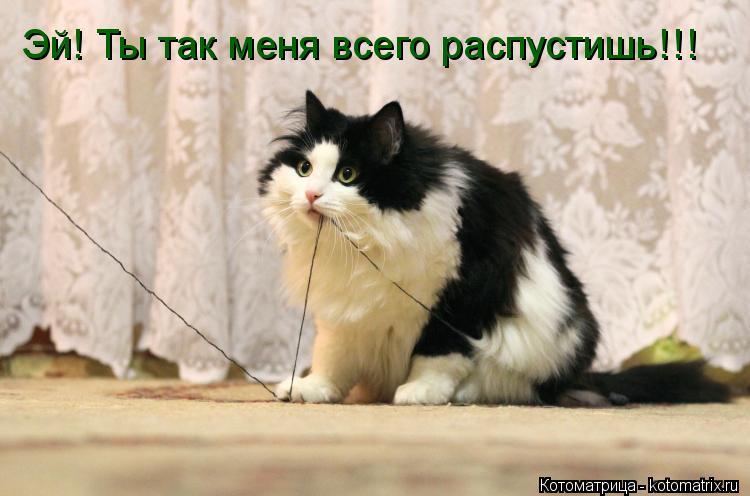 Котоматрица: Эй! Ты так меня всего распустишь!!!