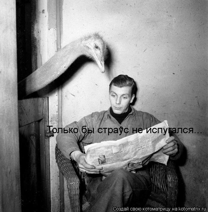 Котоматрица: Только бы страус не испугался...