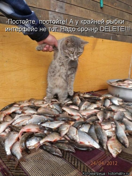Котоматрица: -Постойте, постойте! А у крайней рыбки  интерфейс не тот. Надо срочно DELETE!!!