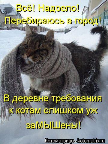 Котоматрица: Всё! Надоело! Перебираюсь в город! В деревне требования к котам слишком уж заМЫШены!