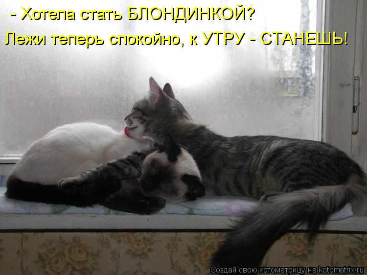 Котоматрица: - Хотела стать БЛОНДИНКОЙ? Лежи теперь спокойно, к УТРУ - СТАНЕШЬ!