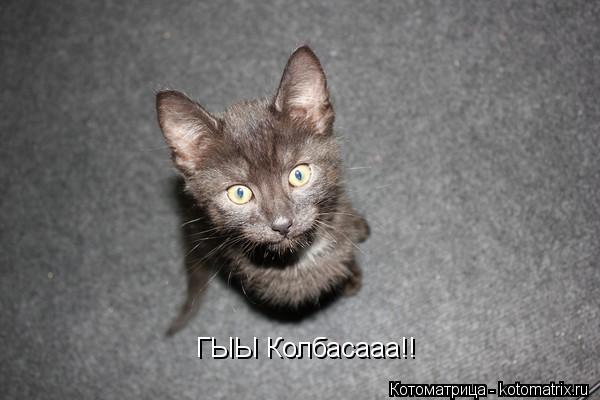 Котоматрица: ГЫЫ Колбасааа!!