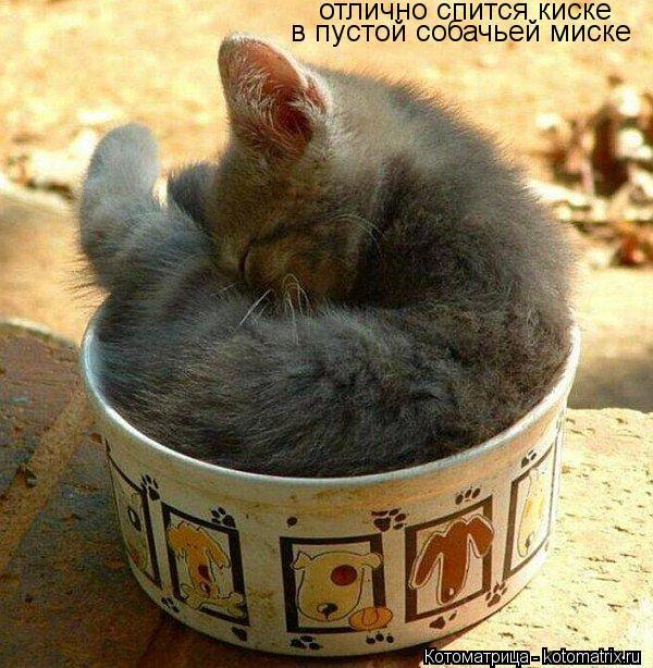 Котоматрица: отлично спится киске в пустой собачьей миске
