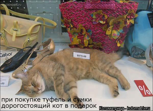 Котоматрица: при покупке туфель и сумки дорогостоящий кот в подарок