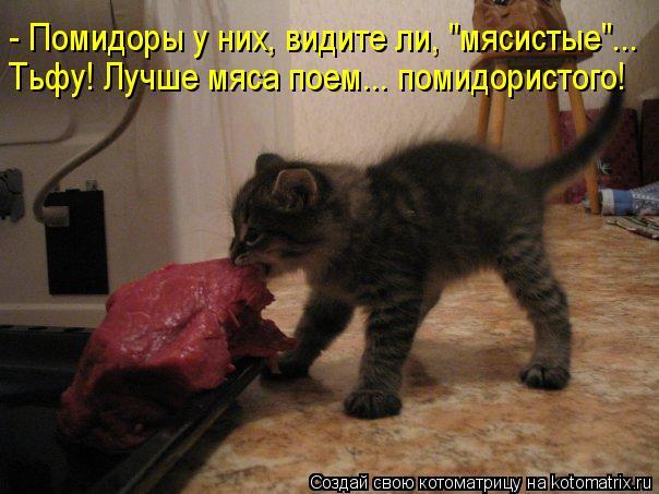 """Котоматрица: - Помидоры у них, видите ли, """"мясистые""""... Тьфу! Лучше мяса поем... помидористого!"""