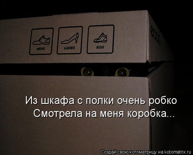 Котоматрица: Из шкафа с полки очень робко Смотрела на меня коробка...