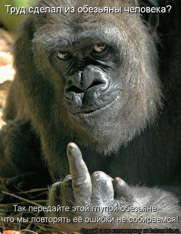 Котоматрица: Труд сделал из обезьяны человека?  что мы повторять её ошибки не собираемся! Так передайте этой глупой обезьяне,