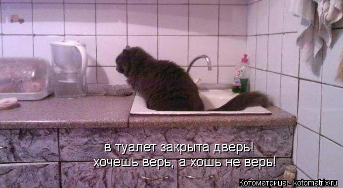 Котоматрица: в туалет закрыта дверь! хочешь верь, а хошь не верь!