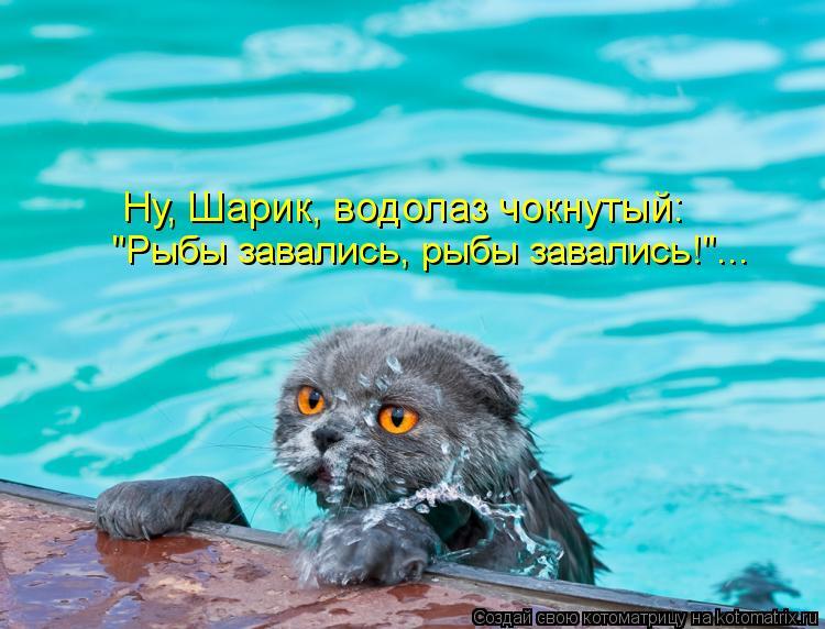 """Котоматрица: """"Рыбы завались, рыбы завались!""""... Ну, Шарик, водолаз чокнутый:"""