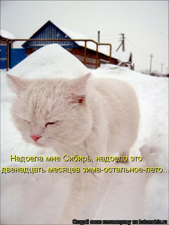 Котоматрица: двенадцать месяцев зима-остальное-лето... Надоела мне Сибирь, надоело это: