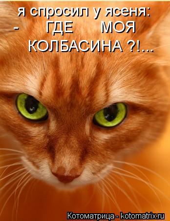 Котоматрица: я спросил у ясеня: -      ГДЕ      МОЯ КОЛБАСИНА ?!...