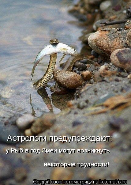 Котоматрица: Астрологи предупреждают: у Рыб в год Змеи могут возникнуть  некоторые трудности!