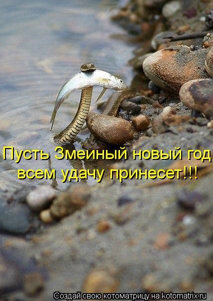 Котоматрица: Пусть Змеиный новый год  всем удачу принесет!!!