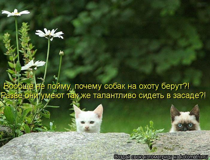 Котоматрица: Вообще не пойму, почему собак на охоту берут?! Разве они умеют так же талантливо сидеть в засаде?!