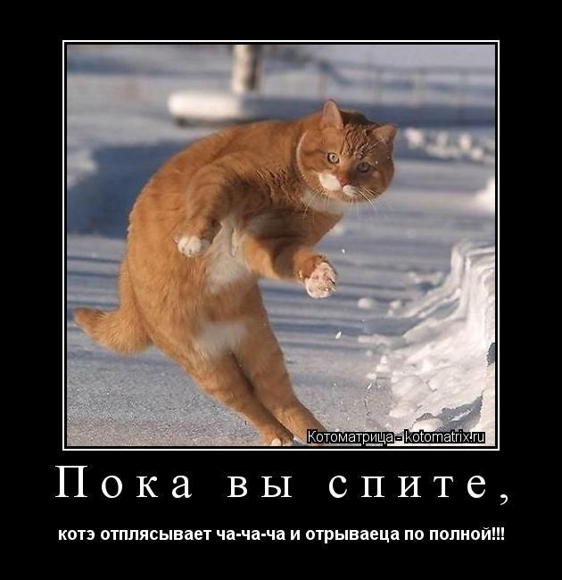 Котоматрица: Пока вы спите, котэ отплясывает ча-ча-ча и отрываеца по полной!!!