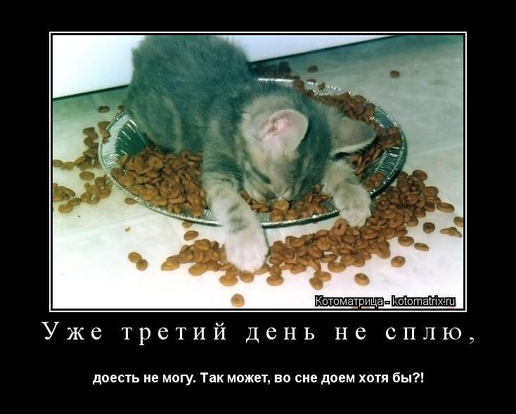Котоматрица: Уже третий день не сплю, доесть не могу. Так может, во сне доем хотя бы?!