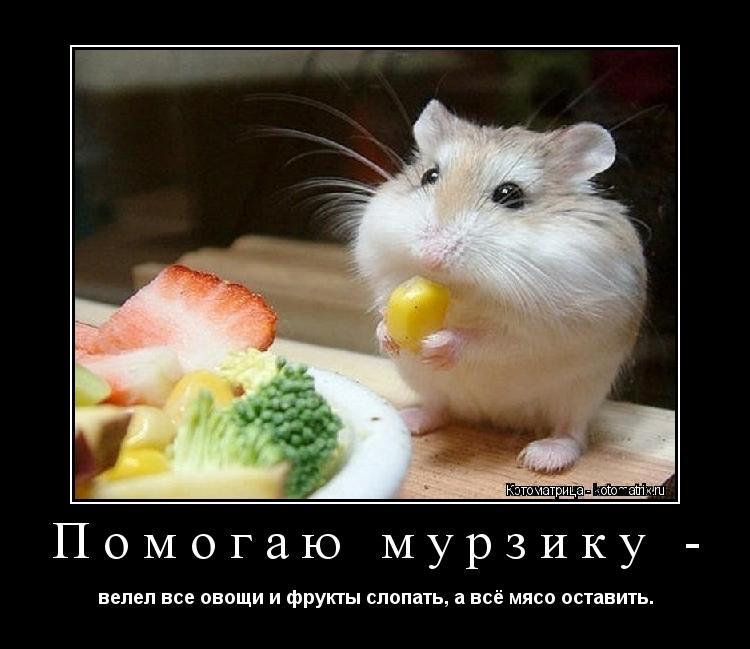 Котоматрица: Помогаю мурзику - велел все овощи и фрукты слопать, а всё мясо оставить.