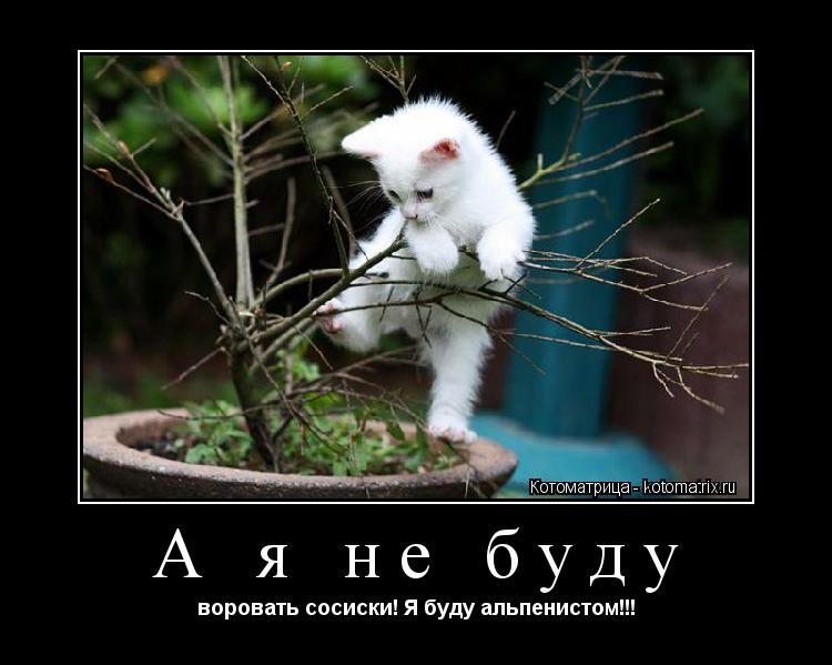 Котоматрица: А я не буду воровать сосиски! Я буду альпенистом!!!