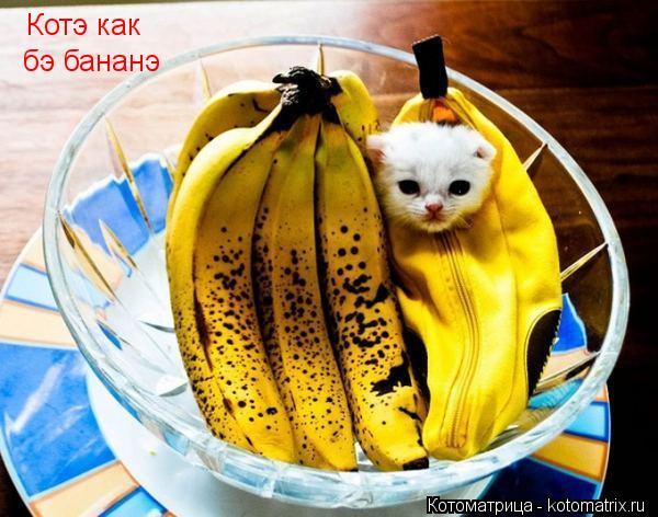 Котоматрица: Котэ как бэ бананэ