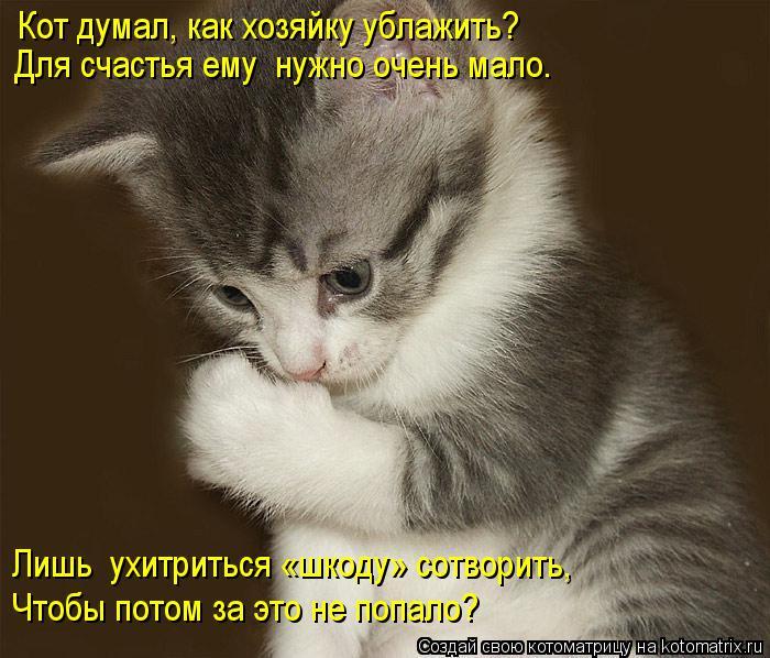 Котоматрица: Кот думал, как хозяйку ублажить? Для счастья ему  нужно очень мало. Лишь  ухитриться «шкоду» сотворить, Чтобы потом за это не попало?