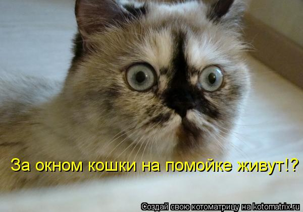 Котоматрица: За окном кошки на помойке живут!?