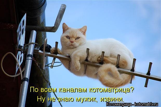 Котоматрица: По всем каналам котоматрица?  Ну не знаю мужик, извини.