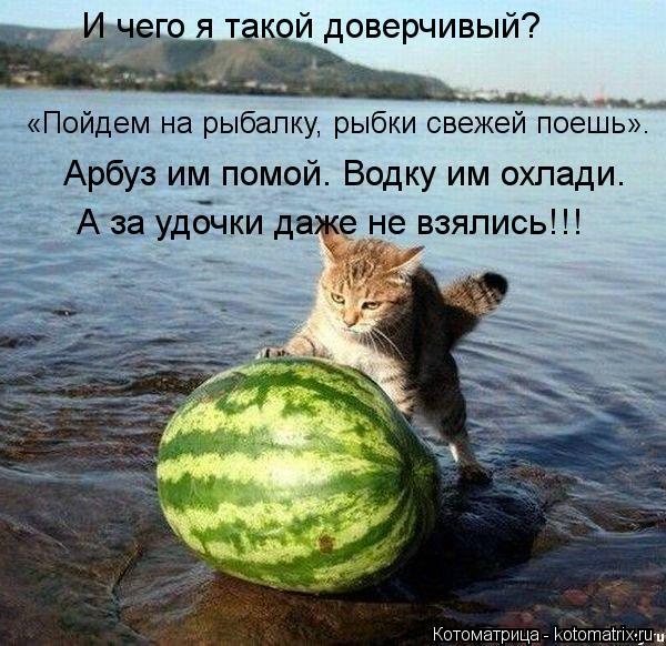 Котоматрица: И чего я такой доверчивый?    «Пойдем на рыбалку, рыбки свежей поешь».  Арбуз им помой. Водку им охлади.  А за удочки даже не взялись!!!