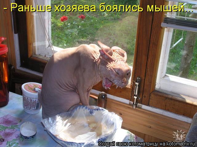 Котоматрица: - Раньше хозяева боялись мышей...