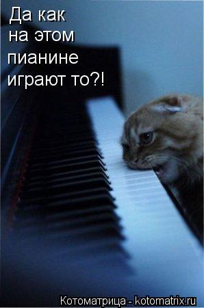 Котоматрица: Да как на этом пианине играют то?!